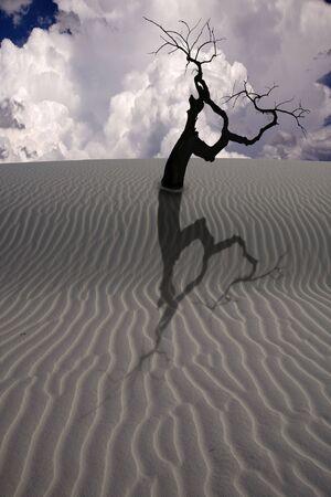 Desert Scene Stock Photo - 6308141