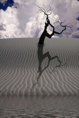 Water in desert with single tree photo