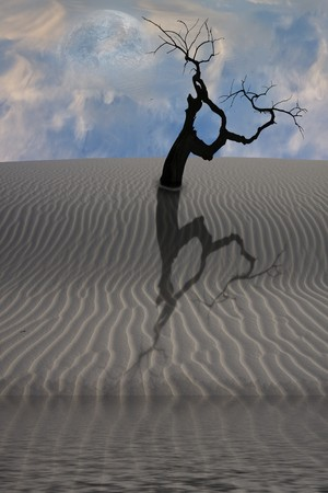 Water in desert with single tree Stock Photo - 7057654