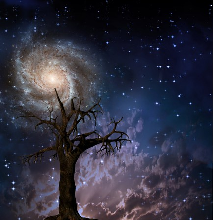 Tree and night sky with stars photo