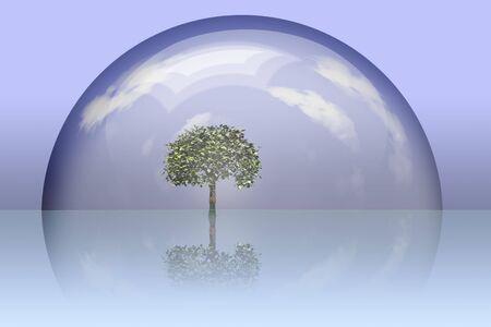 Boom onder glazen koepel bewaard