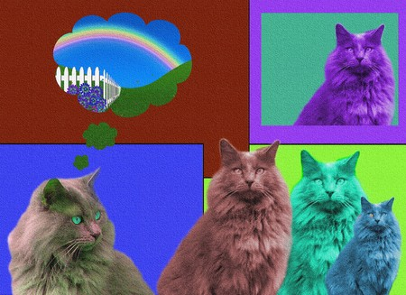 POPart Cats with texture photo