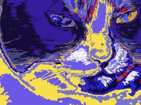 Artistic Cat photo