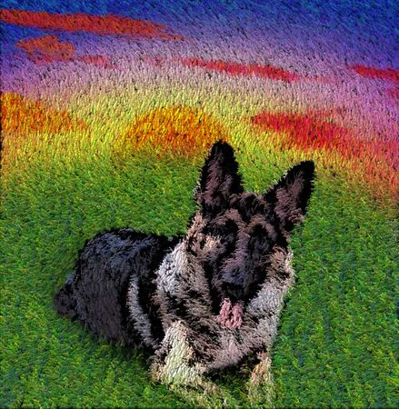 shepard: German Shepard  Stock Photo