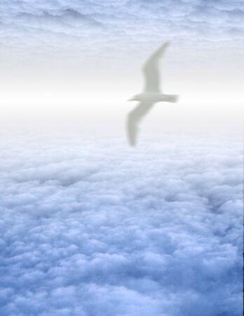 Bird soars in serene cloudscape photo