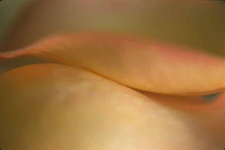 Very Soft Focus Rose Petals Stock Photo - 7869796