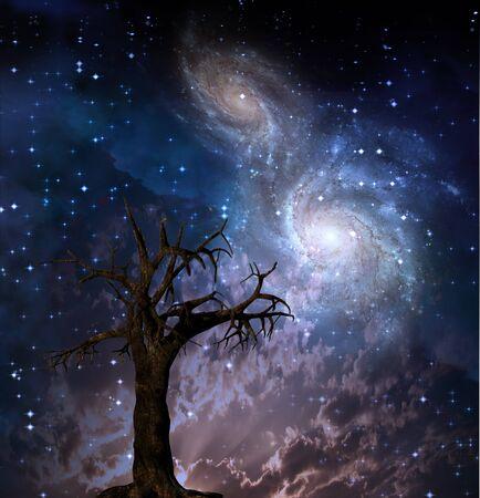 Hoge resolutie hemelse Tree