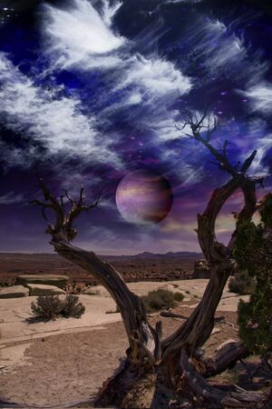 Desert Tree and Horizon photo