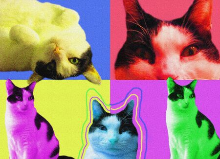 POP art Cats with texture photo