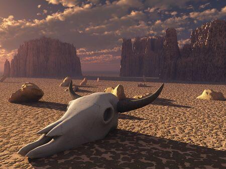 animales del desierto: Cr�neo en la puesta de sol del desierto