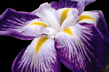 Painted Purple Iris