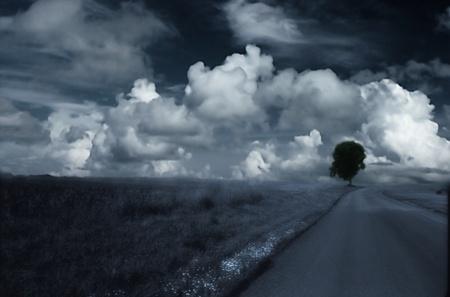 timeless: landscape