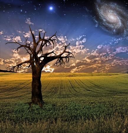 Surrealistische veld