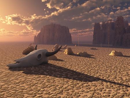 animales del desierto: Cráneo en desierto sunset