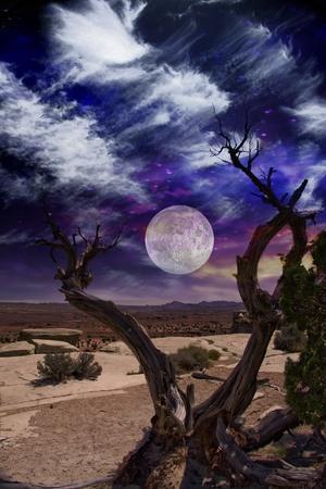 sol y luna: Horizonte y árbol del desierto Foto de archivo