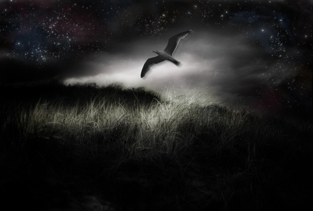 Bird in flight and starry sky