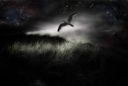 dark nebula: Bird in flight and starry sky