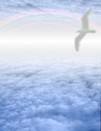 White Bird in Clouds photo