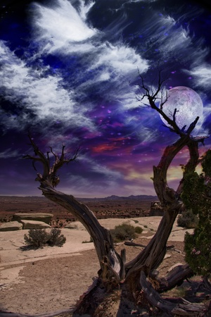 mojave desert: Desert Tree and Horizon