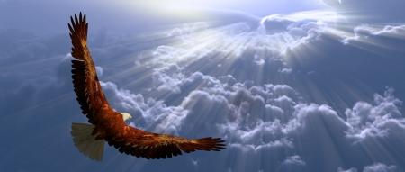 hawks: Aquila in volo sopra le nuvole tyhe