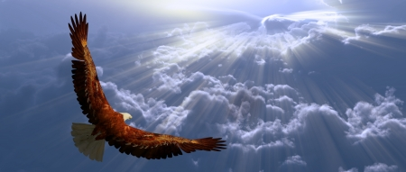 prey: Eagle in flight above tyhe clouds