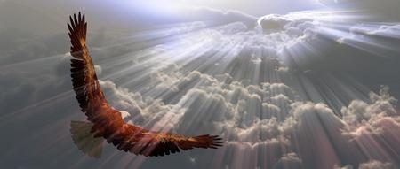 aguila calva: �guila en vuelo por encima de las nubes que Foto de archivo