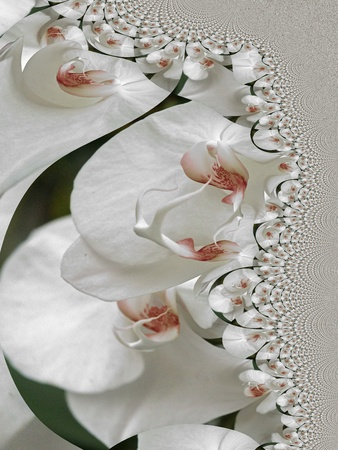 zen garden: Orchids Abstract Stock Photo