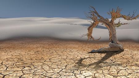 arboles secos: Árbol muerto en el desierto Foto de archivo