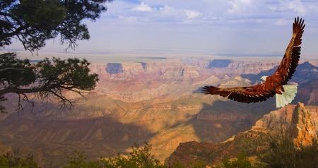 aigle: Aigle prend son envol sur le Grand Canyon aux Etats-Unis