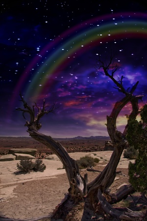 Desert Tree and Horizon with Rainbow photo