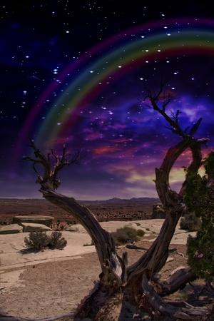 sonne mond und sterne: Wüste Baum und Horizon mit Regenbogen Lizenzfreie Bilder