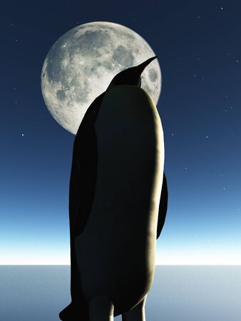 Penguin and moon photo