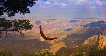 Eagle takes flight over Grand Canyon USA photo