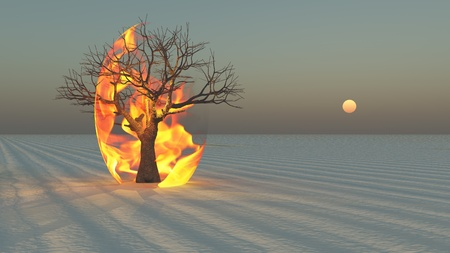 Fire burning around tree in desert Sands photo