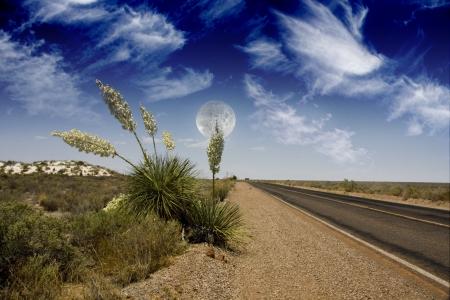 yucca: Desert Road