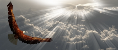 Eagle in vlucht boven tyhe wolken Stockfoto