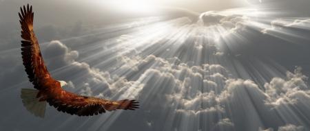 aguila americana: Águila en vuelo sobre las nubes tyhe