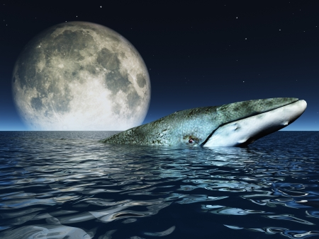 moon fish: Whale on oceans surface with full moon