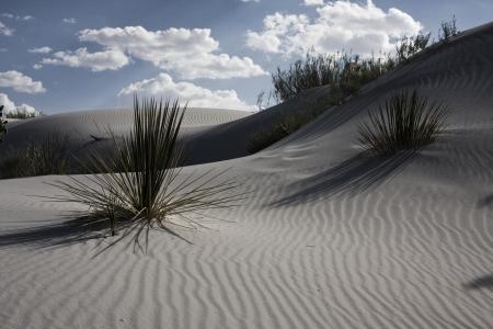 arizona landscape: White Sands New Mexico USA