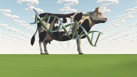 gmo: Cow and questions clouds GMO