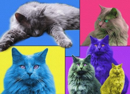 POPart Cats with texture Stock Photo - 17756758