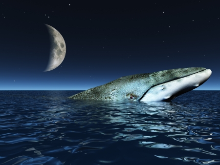 Whale on oceans surface with half moon photo