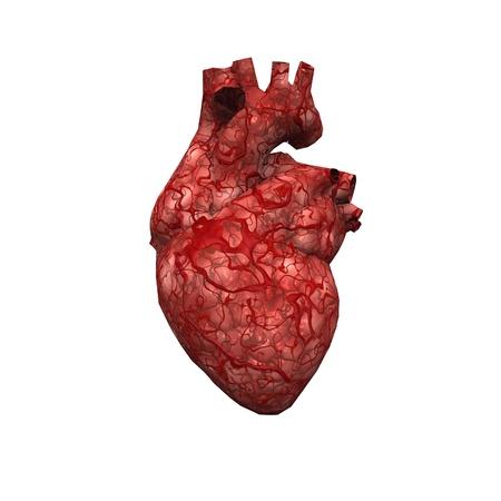 anatomical model: Human Heart
