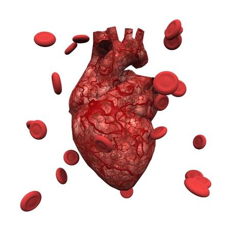 Corazón Humano Fotos, Retratos, Imágenes Y Fotografía De Archivo ...
