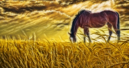 rural scene: Horse grazing in sun drenched field Stock Photo