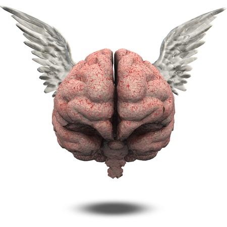 educacion gratis: Cerebro con alas Foto de archivo