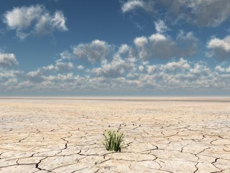 Planten groeien uit droge woestijn modder