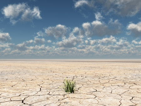 Plants grow up from dried desert mud photo