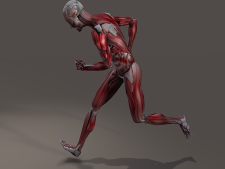 musculature: Male Musculature in Action
