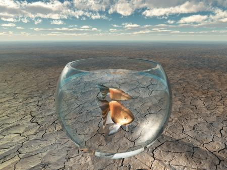 barren: Gold fish in glass bowl in barren desert